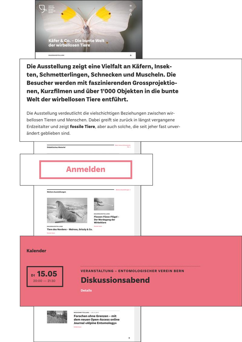 Naturhistorisches Museum – Frontend Blöcke